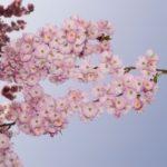 So-netでトレンドサイトを作るならURLを日本語ドメインに変換しよう